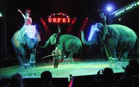 České cirkusy čekají omezení. Zakazují se i drezury slonů