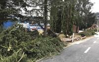 Českem se žene vichřice. Policie hlásí převrácená auta, popadané stromy a elektrické vedení.