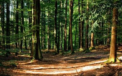Česko rozdá 100 milionů na výsadbu stromů. Pomoci životnímu prostředí tak může úplně každý