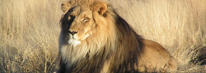 Český manažer zachraňuje v Africe gepardy, levharty, nosorožce a lvy. Do projektů již investoval přes milion