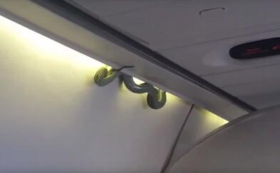 Cestujúcich v lietadle šokovala jedovatá zmija zvíjajúca sa z batožinového priestoru nad hlavou. Let musel rýchlo pristáť