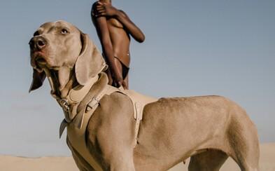 Chceš dopřát svému domácímu mazlíčkovi luxus? První módní dům pro psy přináší kožená vodítka či popruhy za tisíce korun