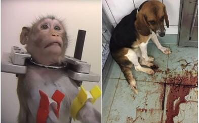 Chemikálie im tu spôsobovali vykrvácanie i smrť. Hrozivé laboratórium s týranými zvieratami konečne zatvorili