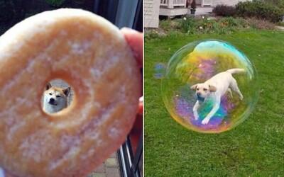 Chlapík si na internete spravil slušný biznis z hodnotenia psov. Denne mu ľudia posielajú tie najroztomilejšie fotky