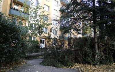 ČHMÚ: Na Česko se žene vichřice. Silný vítr bude lámat stromy a komplikovat dopravu