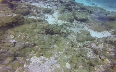 Chobotnica na morskom dne zvláda kamufláž na jednotku. Dokázal by si ju vypátrať?