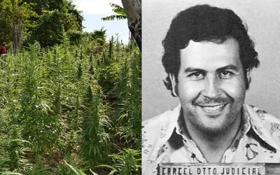 Chorvatského dědečka označují za Pabla Escobara. Dlouhé roky pěstuje marihuanu, ale snaží se lidem pomáhat
