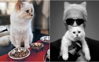 Choupette Lagerfeld je najbohatšia a najznámejšia mačka vo svete módy. Okrem luxusného života má aj osobného šoféra či bodyguarda