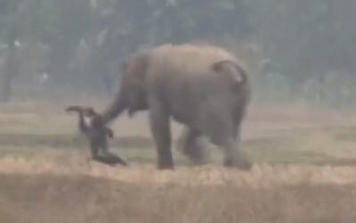 Chtěl si udělat selfie se slonem, zvíře muže začalo honit a téměř ho zašláplo