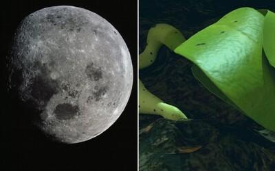 Čína na Měsíci vypěstovala bavlnu. Za rok na místo vyšle zvířata