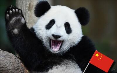 Čína vystěhuje desetitisíce lidí z jejich domovů, aby vytvořila pandí rezervaci velkou asi jako třetina Česka