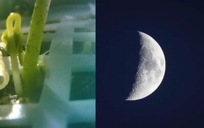 Číňania na Mesiaci pestujú rastliny. Mimo našej Zeme vyrástol úplne prvý púčik