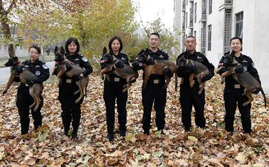 Čínska polícia získala 6 klonovaných psov. Ich DNA sa zhoduje na viac ako 99 %