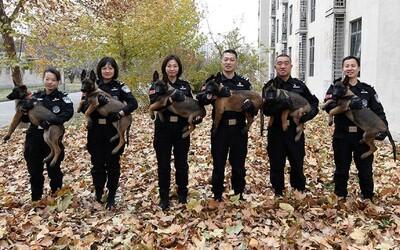 Čínská policie získala 6 klonovaných psů. Jejich DNA se shoduje na více než 99 %