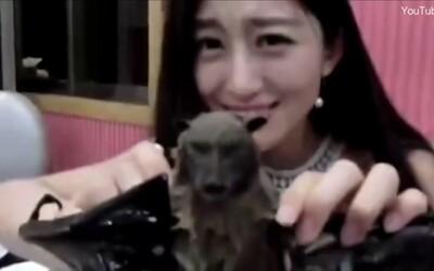 Čínská youtuberka se omluvila za video, na kterém jí netopýra. Právě taková pochoutka je pravděpodobně zdrojem koronaviru