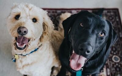 Čínské město Šen-čen zakázalo konzumaci psů a koček. Opatření se týká 12,5 milionu lidí