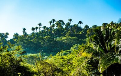 Čo sa stane, ak zmiznú všetky pralesy? Ani náhle zastavenie výrubu nie je šťastným riešením