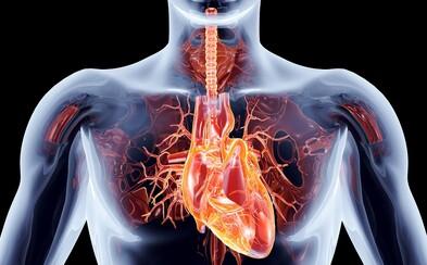 Čo vieš o ľudskom tele? (Kvíz)