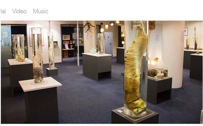 Co všechno ukrývá muzeum pohlavních orgánů na Islandu? Vorvaňův nástroj atakuje téměř dva metry