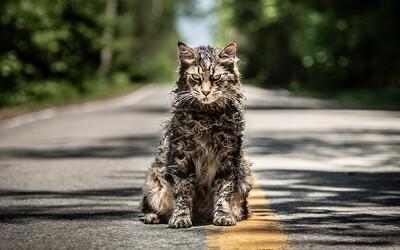 Cyntoryn zvieratiek nie je urážkou adaptácie Stephena Kinga, ale ani adeptom na horor roku (Recenzia)