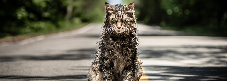 Cyntoryn zvieratiek Stephena Kinga bude R-kovým krvavým hororom plným nemŕtvych zvierat i ľudí