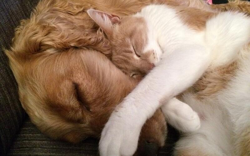 Kto je lojálnejší k majiteľovi – psy či mačky? Nová vedecká štúdia hľadala odpoveď.