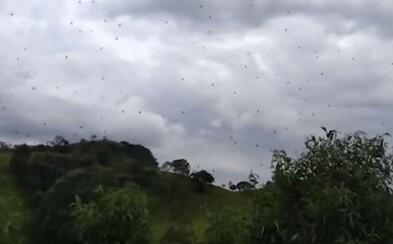 Déšť plný stovek pavouků? Děsivé video z Brazílie naplní tvé nejhorší noční můry