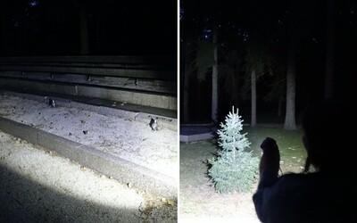 Strávili sme takmer celú noc na mieste, kde gestapo brutálne zavraždilo 69 ľudí. Naozaj naháňa lesopark Brezina za tmy hrôzu?