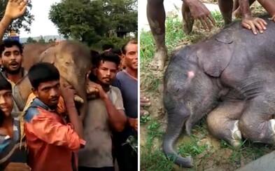 Dedinčania na pleciach odniesli zranené 100-kilové slonie mláďa niekoľko kilometrov, aby mu zachránili život