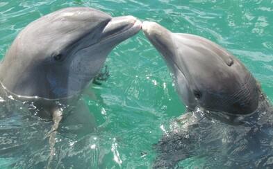 Delfínie samice majú vo vagínach ukrytú zbraň. Vedia tak odohnať dotieravých samcov