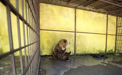 Deň aj noc v klietke. Medveď Tomi si hryzie vlastné končatiny, aby sa vymanil z hororového života v Albánsku
