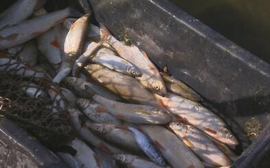 Desítky tun uhynulých ryb, otrávení Bečvy kyanidem řeší policie