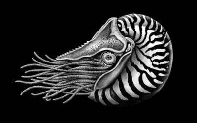 Detailné portréty zvierat vytvorené len atramentom a perom
