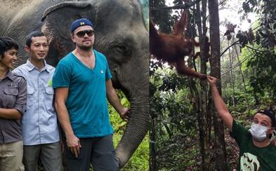 DiCaprio neostáva len pri prázdnych rečiach. Planéte a zvieratám pomáha vlastnými rukami a peniazmi