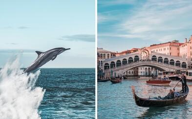 Do Benátek se delfíni nevrátili. Byl to hoax