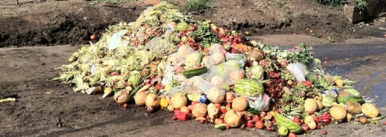 Do koše vyhodíme 1,6 miliardy tun potravin, zatímco 815 milionů lidí hladoví. Jak omezit plýtvání jídlem?