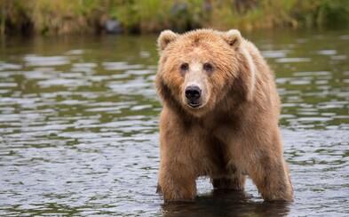 Do Krkonoš se zřejmě po 216 letech vrátili medvědi!