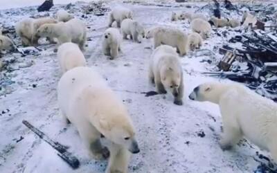 Do ruskej dedinky vtrhlo 50 ľadových medveďov. Naháňajú ľudí, vstupujú do bytoviek, ale zastreliť ich nikto nesmie