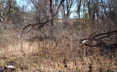 Dokážeš spozorovať profesionálneho vojaka ukrytého vo vegetácii?