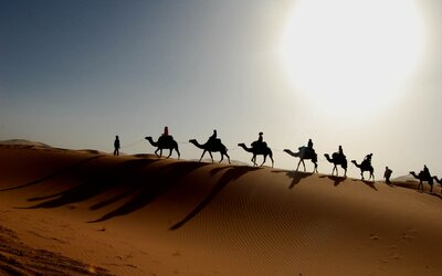 Dokáží Afričané zabránit rozšiřování Sahary pomocí projektu Velká zelená zeď Afriky?