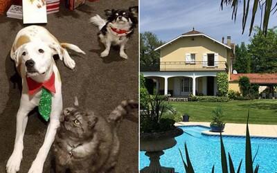 Dokonalá dovolenka za to, že niekomu postrážiš psa či mačku? Cestovať po svete prakticky zadarmo môžeš aj ty