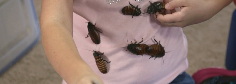 Doma chová viac ako 7000 švábov a miluje ich z celého srdca. Malá Shelby bola hmyzom fascinovaná už ako 18-mesačné dievčatko