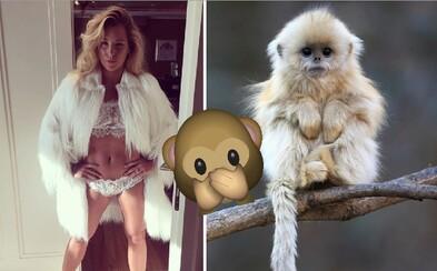 Dominike Cibulkovej Slováci brutálne nadávajú za kožuch, ktorý je vraj z opíc. Tenistku priam rozniesli v zuboch
