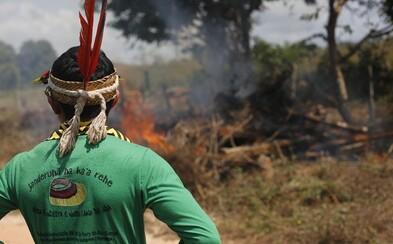 Domorodci sa bránia zubami-nechtami a spoločne odolávajú nátlaku ilegálnych drevorubačov