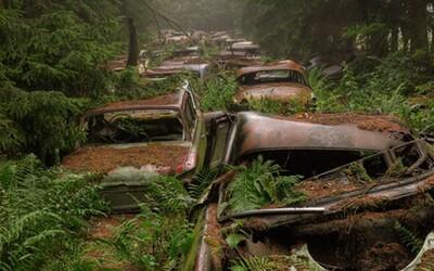 Dopravná zápcha, akú si nevieš predstaviť, už 70 rokov straší v belgickom lese