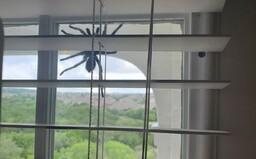 Dvojici zaskočil obrovský pavouk větší než lidská ruka na dveřích domu