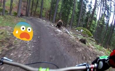 Dvom cyklistom sa v slovenskom bike parku priplietol do cesty medveď. Šťastie stálo pri nich a hroziacemu útoku sa úspešne vyhli