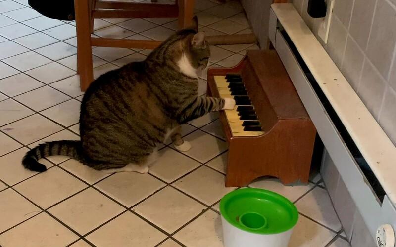 """Kocúr sa naučil """"hrať na klavír"""". Jeho majiteľke tým hlási, že chce žrať. Pozri sa, ako vyzerá jeho hra na hudobný nástroj."""