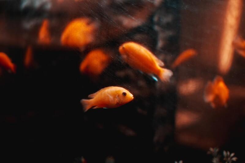 Ryba má 3-sekundovú pamäť.