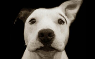 Emotívne fotografie psíkov z útulku, z ktorých vás zamrazí